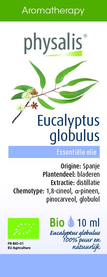 Physalis Eucalyptus globulus
