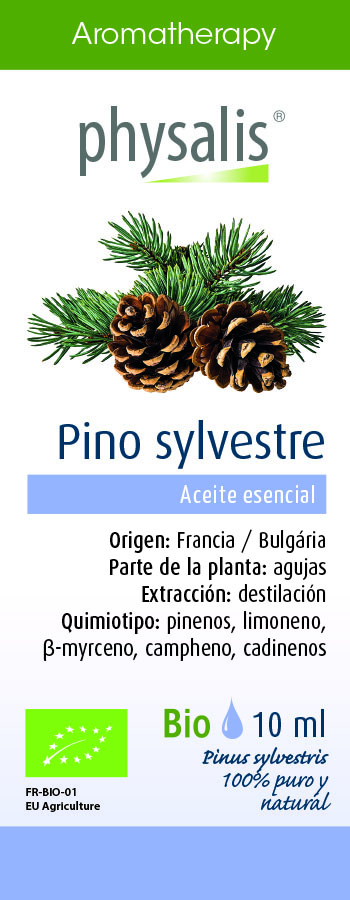 Physalis Pino sylvestre